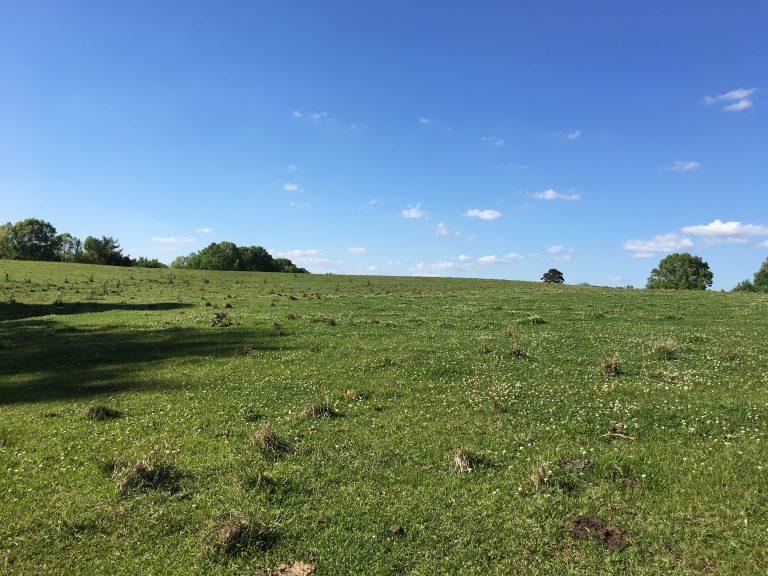 Pasture & Farm Land