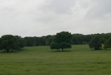 111 Acre Land Sale – Argyle, TX